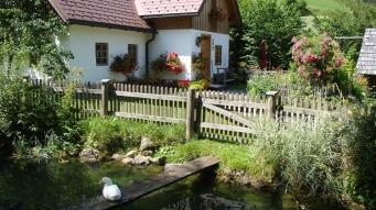 Unser Fischteich und die Hausente